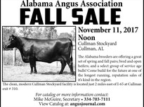 Alabama angus